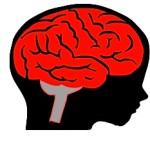 Kid head brain illus xlnt