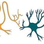 Neurons connect illust
