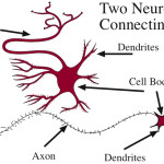 Neurons-connecting