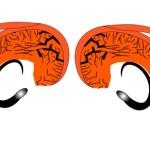 Split brain R-L illus