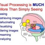 Visual Brain illus more than seeing