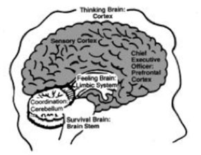 brain based learning research paper