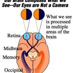 Brain's Visual System