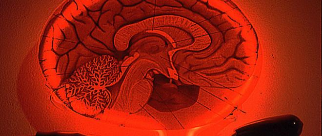 Maximize Selling: Brain-Based Principles That Increase Success